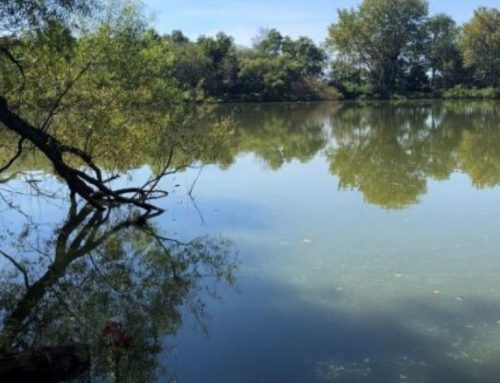 Will Toxic Algae Blooms Be An Issue For New Jersey Lakes This Year?