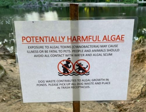 Pet Alert!  Blue-Green Algae in Lake Water is Toxic to Dogs!
