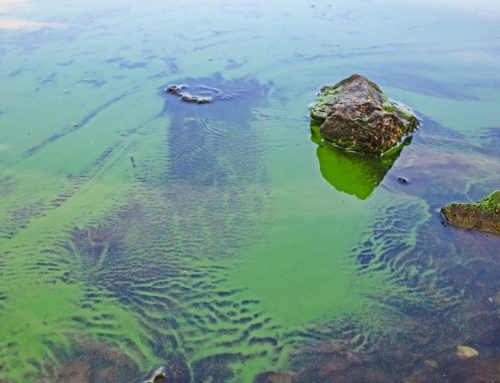 Dangerous algae blooms identified in Meyers Lake in Evansdale, Iowa