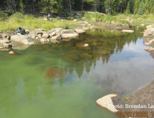 Once Again, Harmful Algae Blooms Found in Dozens of Wyoming Lakes