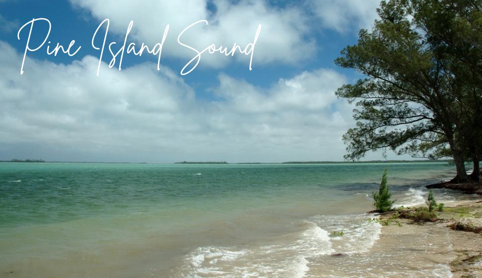 Pine Island Sound Algae