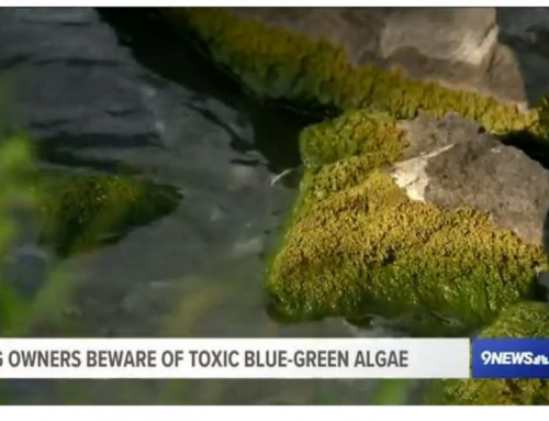 Harmful algae bloom found in Wonderland Lake in north Boulder and harmful to our pets!