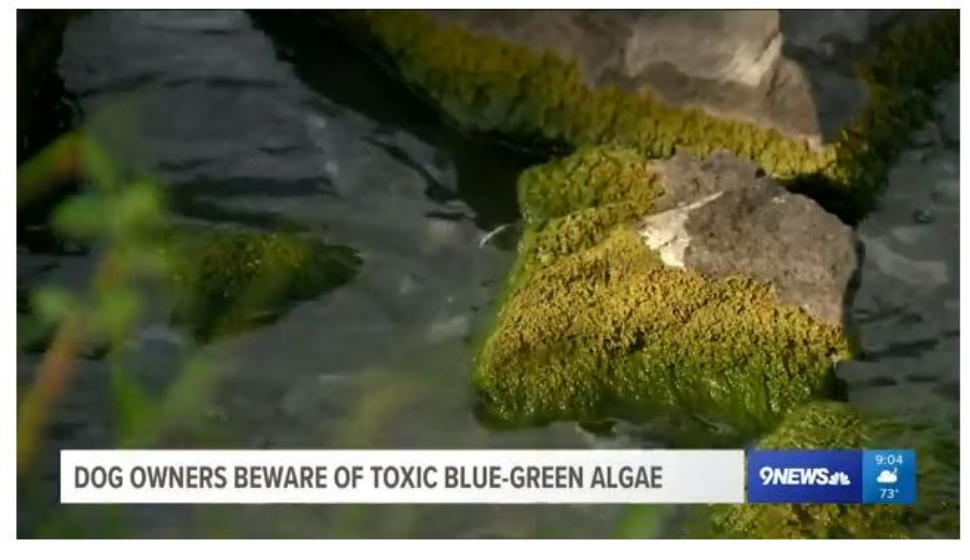 Bleu Green Algae