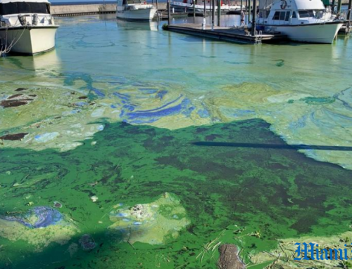 Lake Okeechobee algae bloom threatens coasts again!